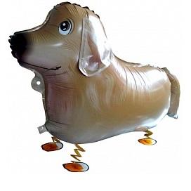 """Купить ходячий шарик в подарок """"Корги"""" в интернет-магазине Шары-и-Шарики.ру"""
